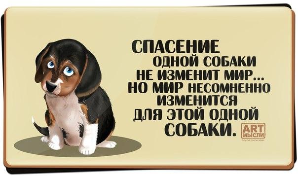 1385950588_frazochk-i-26 (604x357, 108Kb)