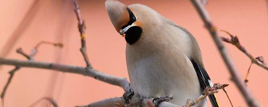 Красивая фотоподборка городских птиц