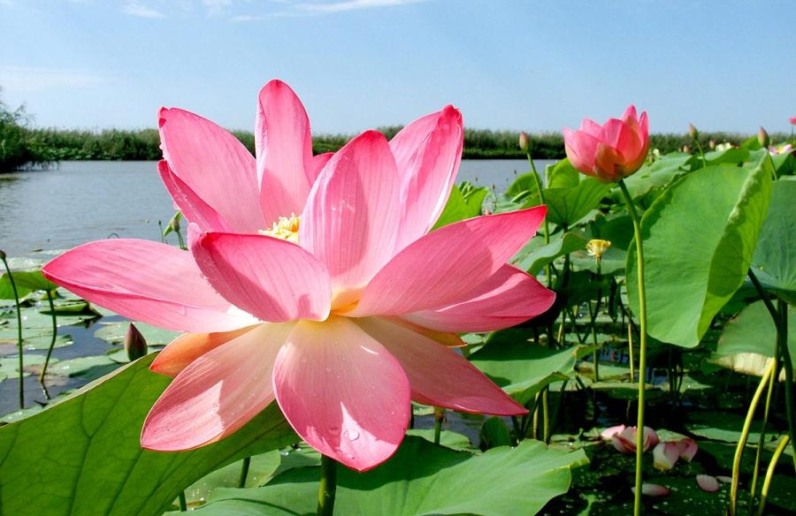 Фильмы онлайн цветок лотоса