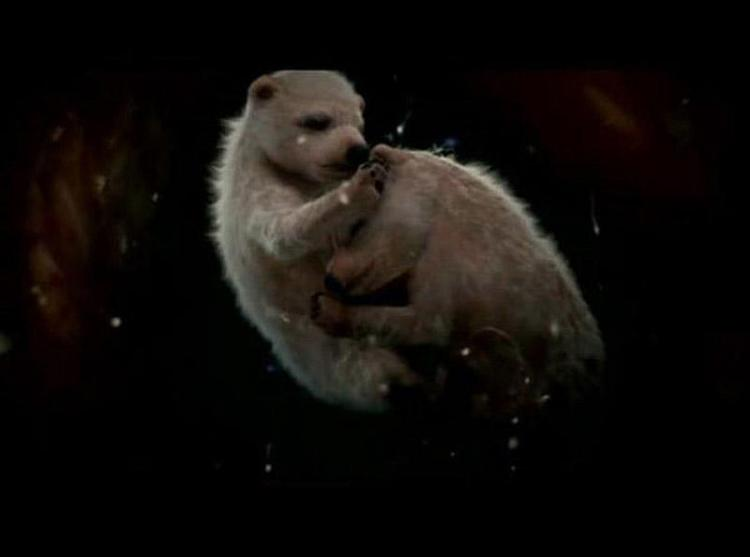 Удивительные фото эмбрионов животных