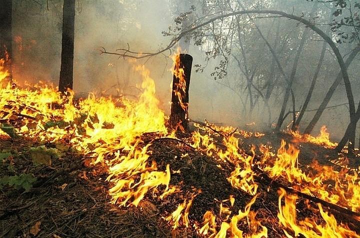 В Подмосковье ликвидировали почти три сотни лесных пожаров