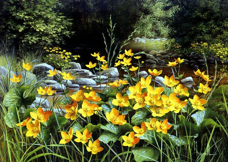 Полевые цветы Mary Dipnall