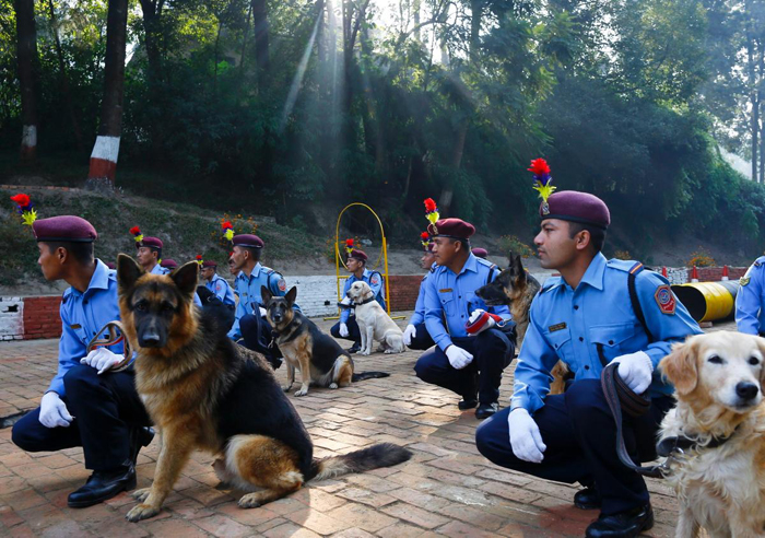 Полицейские собаки на празднике Тихар.