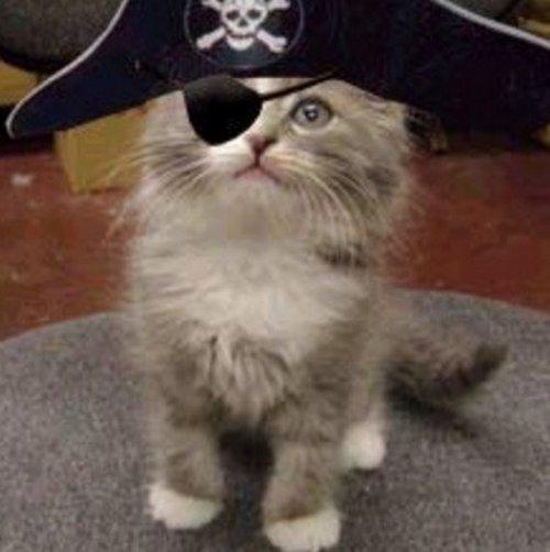 Смешные кошки в костюмах пир…