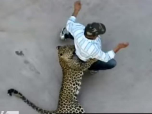 Нападение леопарда на человека посреди улицы попало на видео