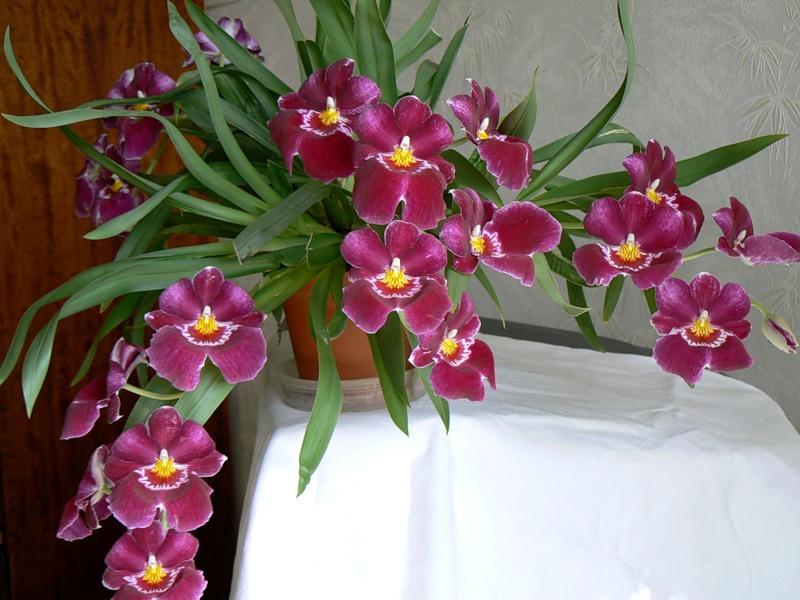 Орхидеи. Уход в домашних условиях. Vo-sadu-li-v-ogorode