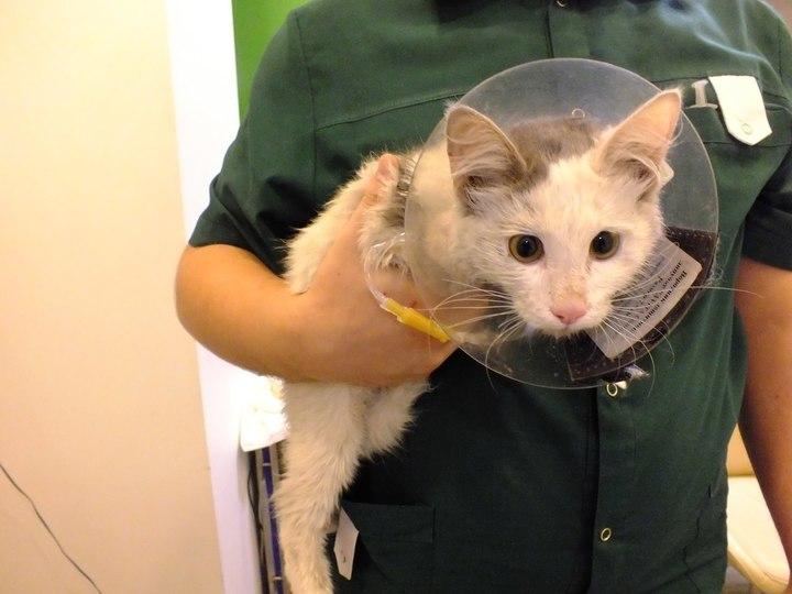 Волгоградские ветеринары выходили котенка, попавшего под трамвай