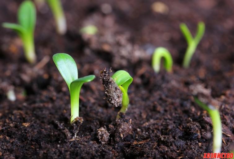 Не боюсь сажать семена в кипяток