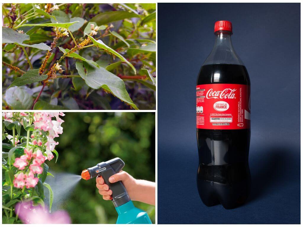 Image result for Кока-кола или пепси в огороде