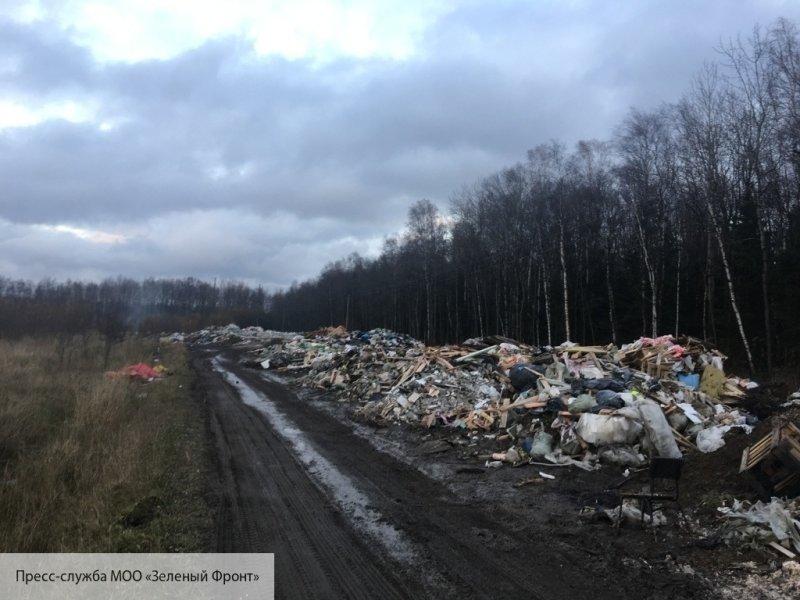 Количество несанкционированных свалок в Петербурге сократилось в два раза