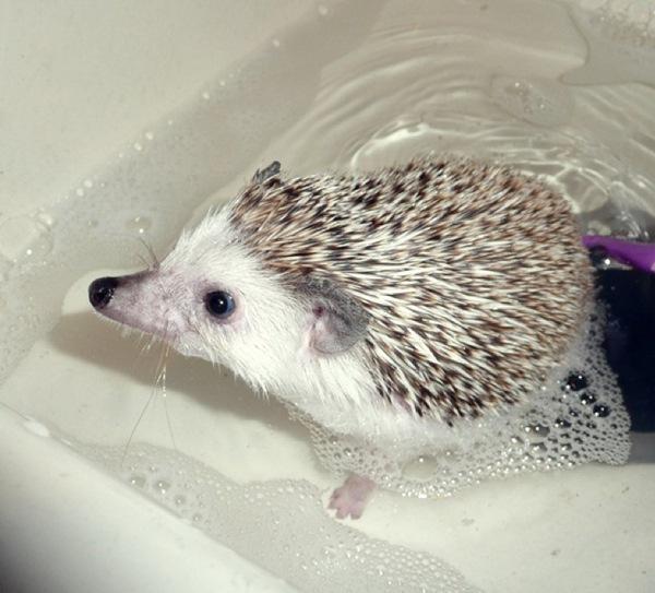 Как моются ежики? (28 фото)