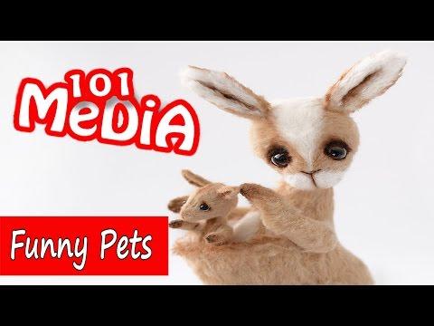 Смешные видео с животными|Самые смешные приколы 2016|Животные милые  забавные подборка приколов 2017