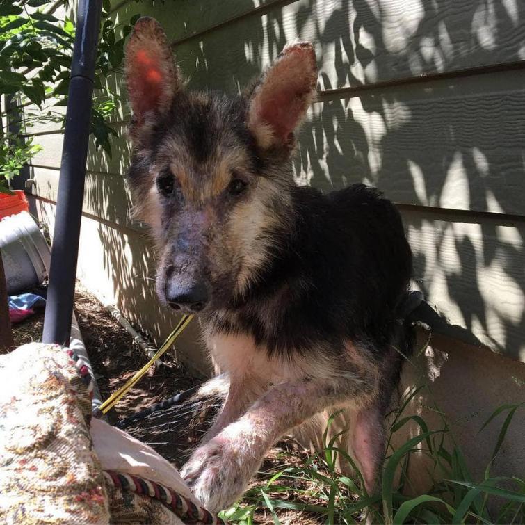 Собаку нашли на грани смерти, больной и истощённой, но через 4 месяца её просто не узнать