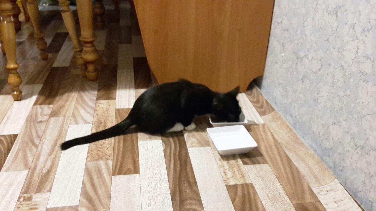 Котик Венечка