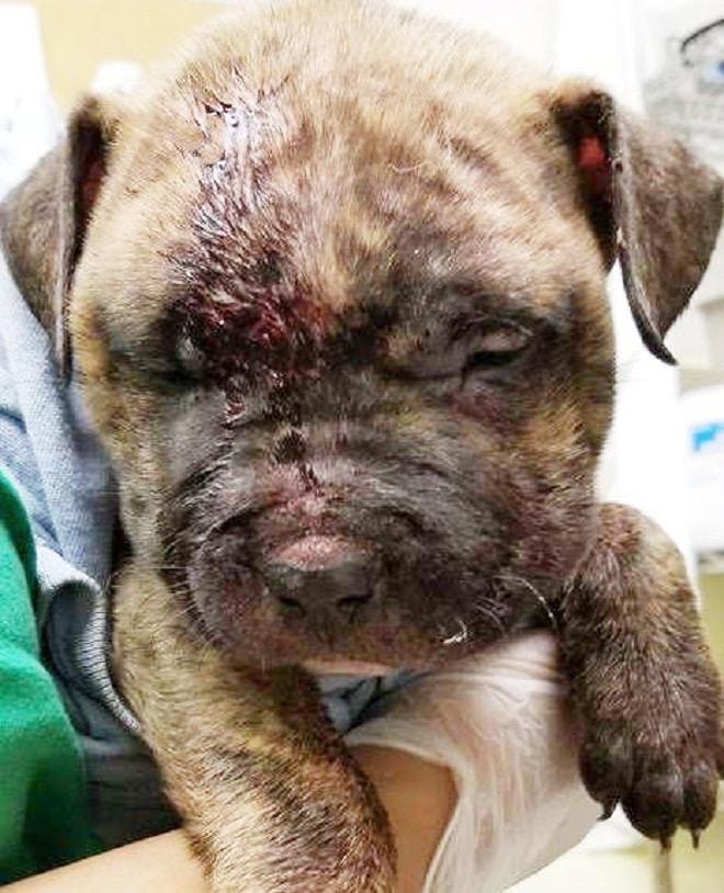 Вместо того, чтобы обратиться к врачам, кто-то выбросил израненного щенка в мусорный контейнер