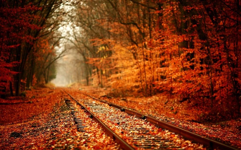 fall09 10 осенних фотографий, которые стали хитами в блогах