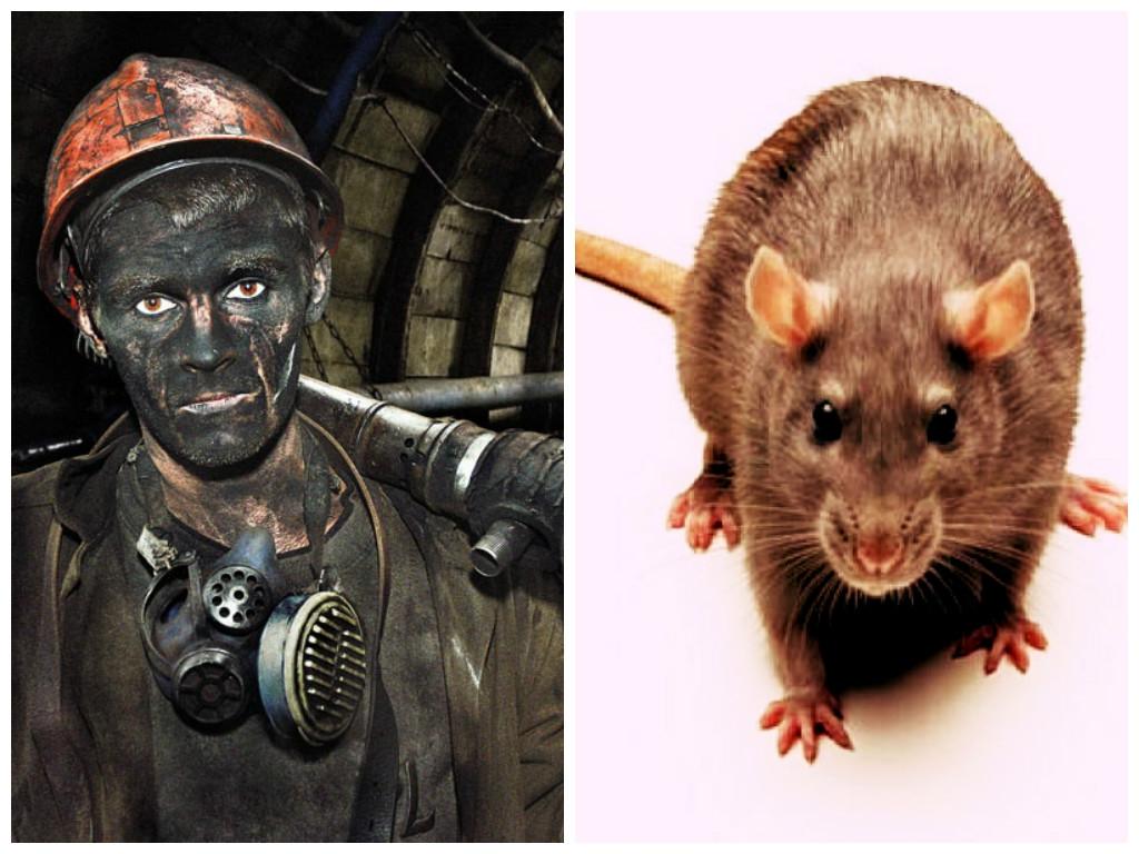 Есть на Кузбассе памятник крысе… Удивительная история, рассказанная одним шахтером.