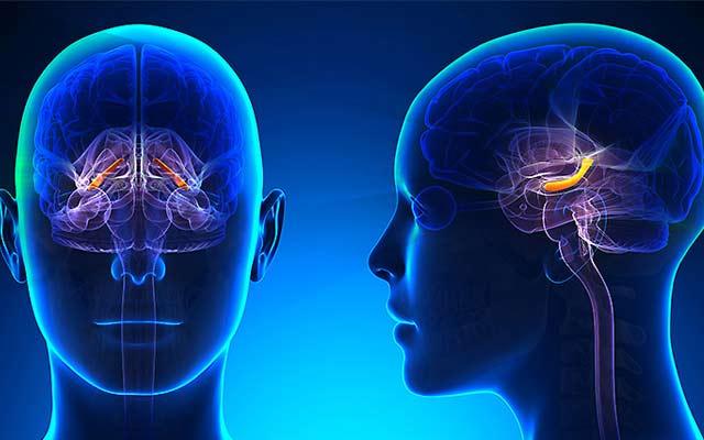 Как не дать умереть мозгу: 10 советов, как избежать возрастного слабоумия