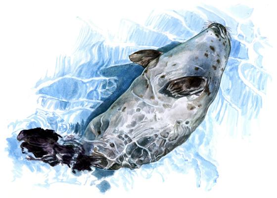 Громкие смерти тихих обитателей Приморского океанариума