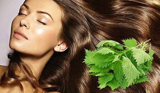 Спасаем волосы с помощью крапивы