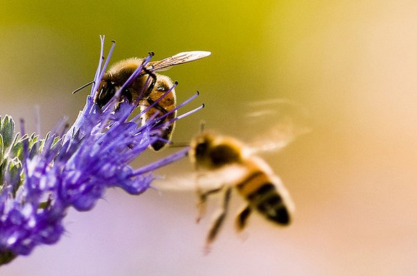 Пример цветка и пчёл