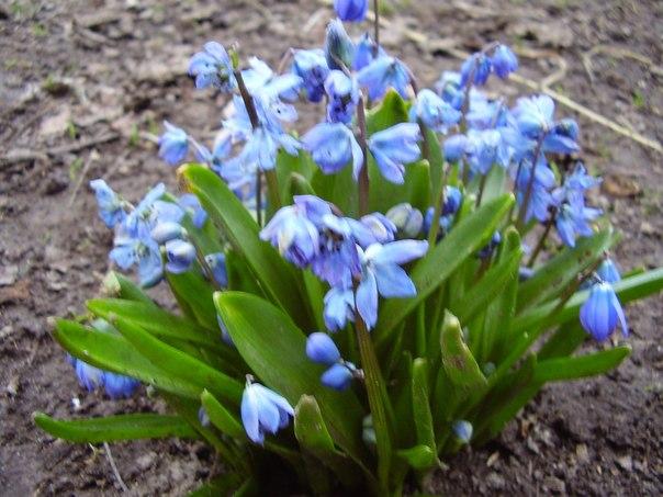 Ваш весенний цветник