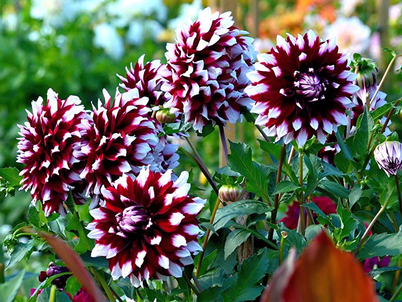 Мне хочется Вам подарить цветы!