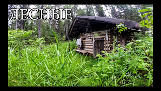ЛЕСНАЯ ИЗБУШКА (20 ЛЕТ ЖИЗНИ) | новая печь и крыша, рыбалка на дикой реке