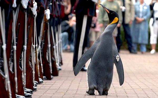 Не просто пингвин, а Сэр Нильс Олав II, полковник норвежской армии