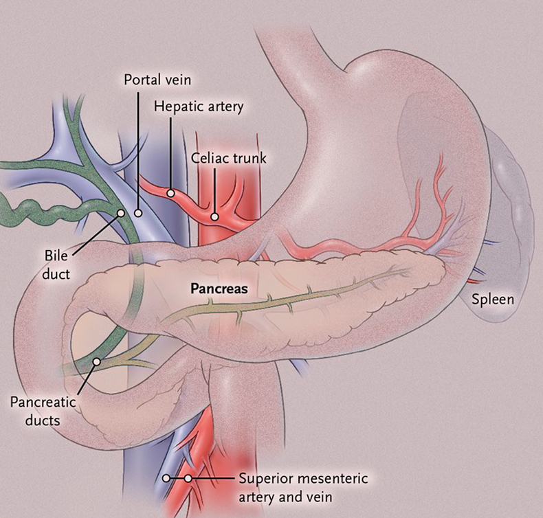 Красные точки на теле: Панкреатит и симптом Тужилина