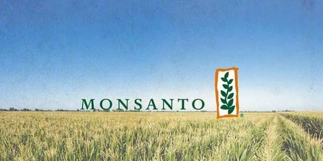 Кто заказчик меморандума РАН о пользе ГМО?