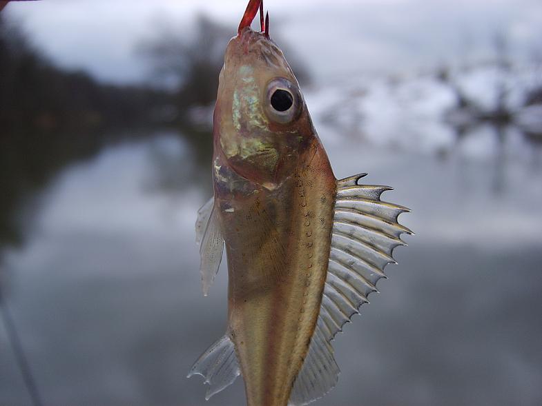 ершик рыбака
