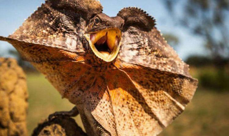 Столкновения опасных животных Австралии с человеком