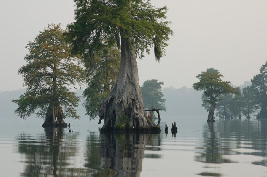Великое Мрачное болото