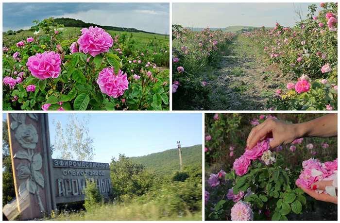 Как побывать в Крыму, нетривиально отдохнуть и немного заработать