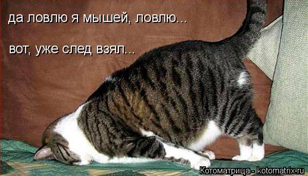 Котоматрица: да ловлю я мышей, ловлю... вот, уже след взял...