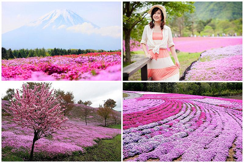BIGPIC19 Буйство красок травяной сакуры