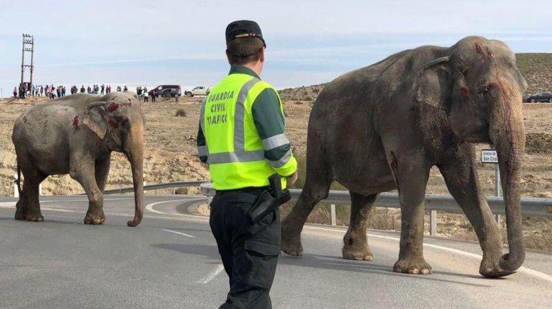 В Испании перевернулся грузовик, в котором перевозили цирковых слонов