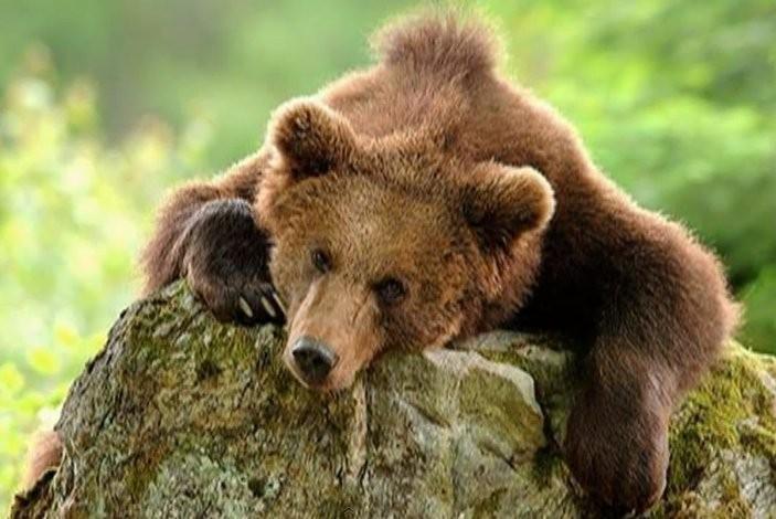 Путин: Медведь ни у кого разрешения спрашивать не будет