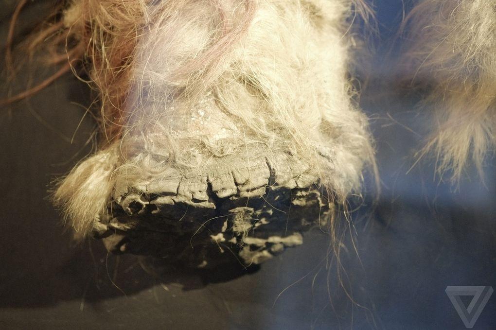 Yuka03 Самый известный мамонт из Якутии: Юка