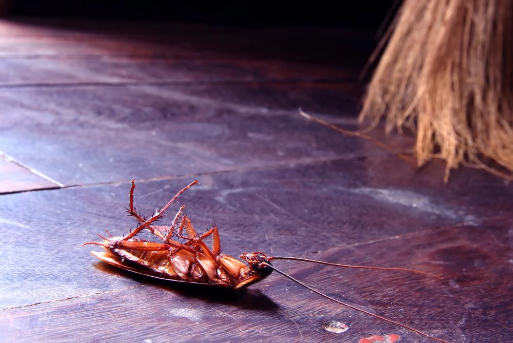Как избавиться от тараканов в квартире: разрабатываем стратегию борьбы с захватчиком