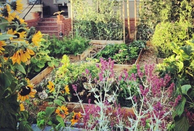 Всего за 60 дней этот парень вырастил крутой сад перед домом