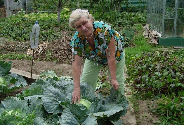 Естественные силы природы против вредителей сада и огорода