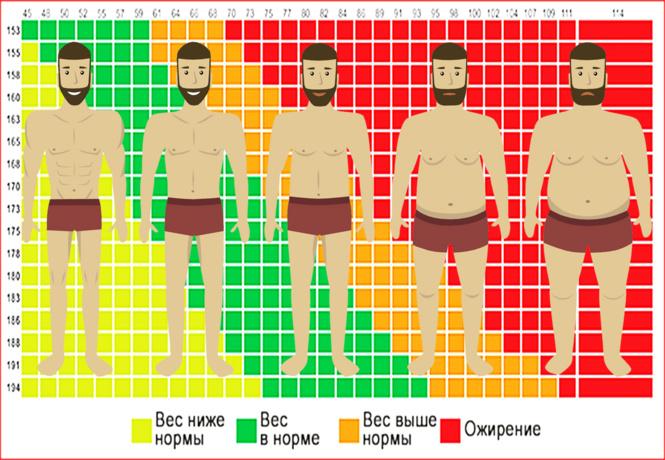 Что такое индекс массы тела и как его рассчитать?