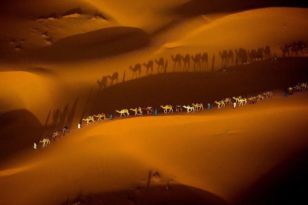Караван в пустыне Сахара, Марокко
