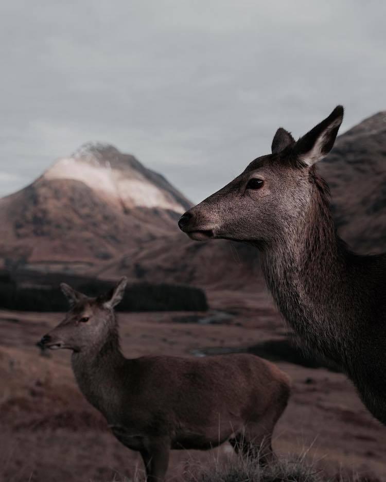 Природа Шотландии в фотографиях Франа Марта