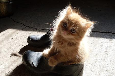 Чем наказывать котов за особое внимание к вашей обуви, лучше эту самую обувь спрятать