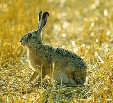 Ночная охота на зайца - не так просто, как может показаться