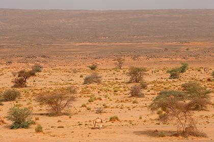 Названа причина превращения покрытой лесами Сахары в пустыню