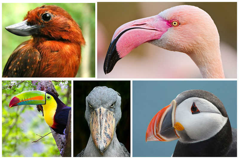 Поразительные птичьи клювы